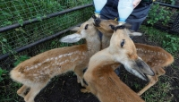للعزل فوائد.. طفرة في مواليد حديقة حيوان روسية خلال إغلاقها بسبب كورونا